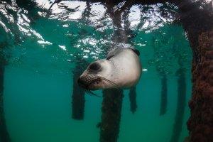 LLP-Seal_at_Rye_5769